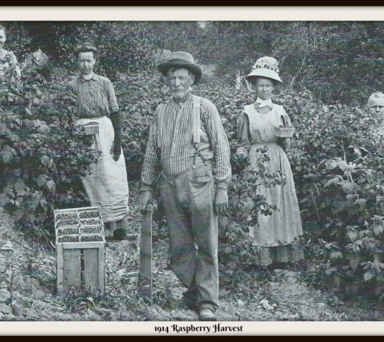 BOONSBORO REFLECTIONS: Boonsboro's Agriculture